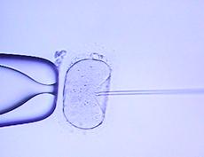 cytoplasmictransfer